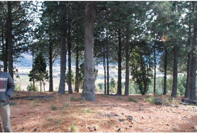 T039 Loteo La Jauría a 8 km de San Martin de los Andes. Esplendidos lotes en la montaña.