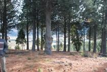 T039 Loteo La Jauría a 8 km de San Martin de los Andes.